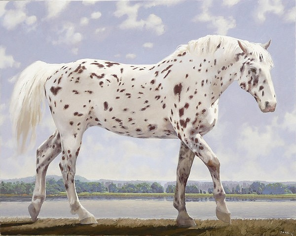 NEIL RODGER, KNABSTRUP FILLY OIL ON CANVAS