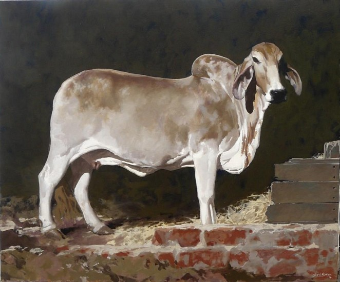 NEIL RODGER, YOUNG BRAHMAN COW IN A STABLE 2010, OIL ON CANVAS