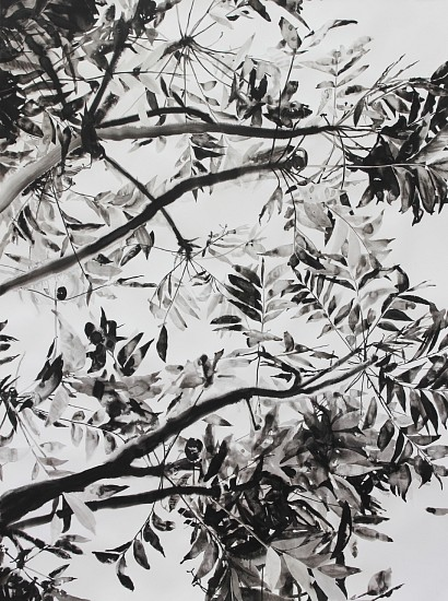 TANYA POOLE, THE EDGE OF THE FOREST 2018, KANDAHAR INK ON FABRIANO PAPER